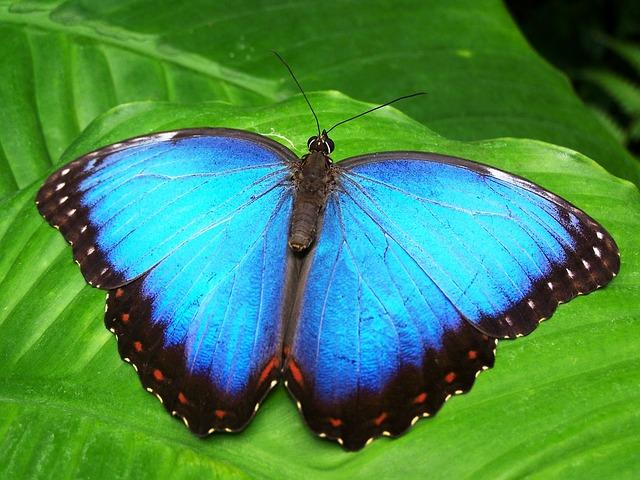 El efecto mariposa, Cuando una pequeña decisión construye un negocio fabuloso